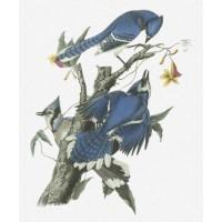 Blue Jay John James Audubon AUD016