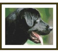 Black Labrador Alert - Chart or Kit
