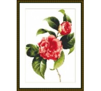 Camellia Japonica - Chart or Kit