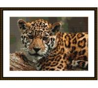 Jaguar Beauty - Chart or Kit