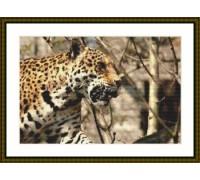 Jaguar Domain - Chart or Kit