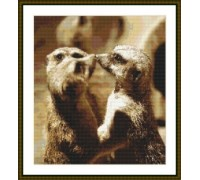 Meerkat Kiss - Chart or Kit