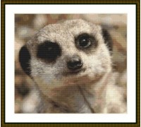 Meerkat Portrait III - Chart or Kit