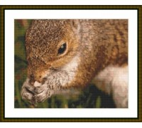 Squirrel Supper - Chart or Kit