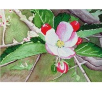 Apple Blossom Chart or Kit
