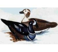 Harlequin Ducks Chart or Kit