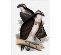 Ospreys Chart or Kit