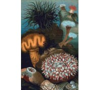 Sea Anemones Chart or Kit