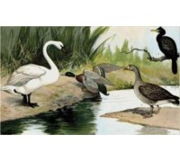 Water Birds Chart or Kit