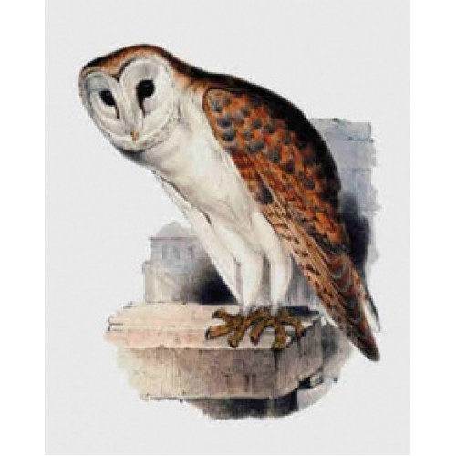 Barn Owl Chart or KitBirds Cross Stitch Collectibles Kits