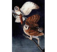 Barn Owls Chart or Kit