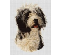 Bearded Collie Chart