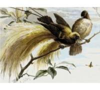 Birds of Paradise Chart or Kit