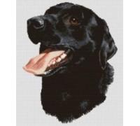 Black Labrador Chart or Kit