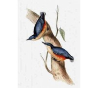 Common Nuthatch Chart or Kit