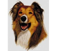 Rough Collie Chart or Kit