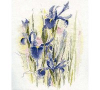 Irises Watercolour - WCI
