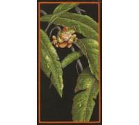 Tree Frog - D35251