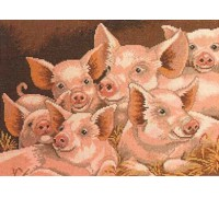Family of Pigs