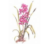 Pink Orchid Study - 14-155C - 26ct