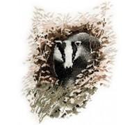 Badger by John Stubbs