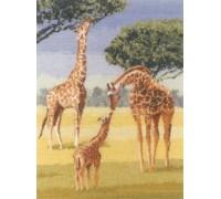 Giraffes by John Clayton