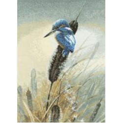 Birds by Warwick Higgs