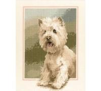 Westie Portrait