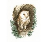 Barn Owl by John Stubbs