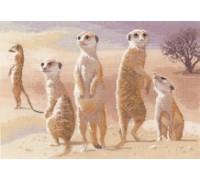 Meerkats by John Clayton