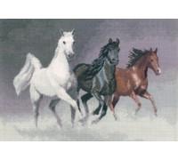 Wild Horses by John Clayton