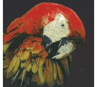 Macaw Chart or Kit
