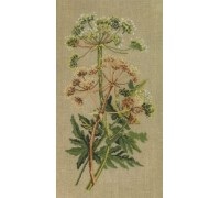 Cow Parsley on Linen - 70-4105 - 26ct