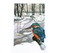 Winter Kingfisher