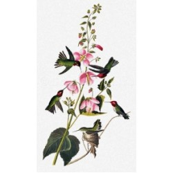 Nature Prints by Scarlet Quince