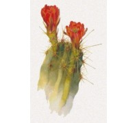 Echinocereus Polyacanthus by Margaret Armstrong