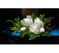 Giant Magnolias on a Blue Velvet Cloth by Heade