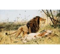 Lion and His Prey by Friedrich Wilhelm Kuhnert