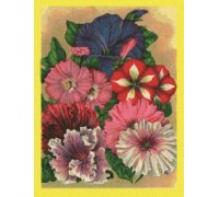 Mixed Petunias Seed Packet