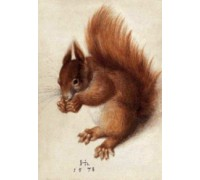 Red Squirrel by Hans Hoffman