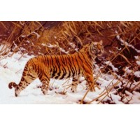 Siberian Tiger in a Snowy Landscape by Hugo Ungewitter