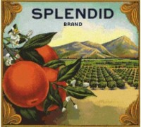 Splendid Orange Crate Label