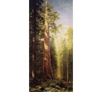 The Great Trees Mariposa Grove, California by Bierstadt