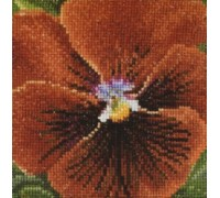 Burnt Orange Pansy - 457A - 18ct