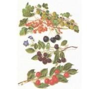 Cherries Sampler Panel