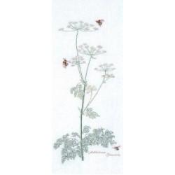 Botanical Floral and Tree Studies