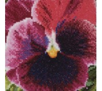 Crimson Pansy - 455A - 18ct