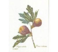 Figs Sampler