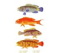 Fish Panel Sampler