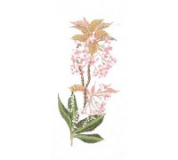 Flowering Cherry Lily